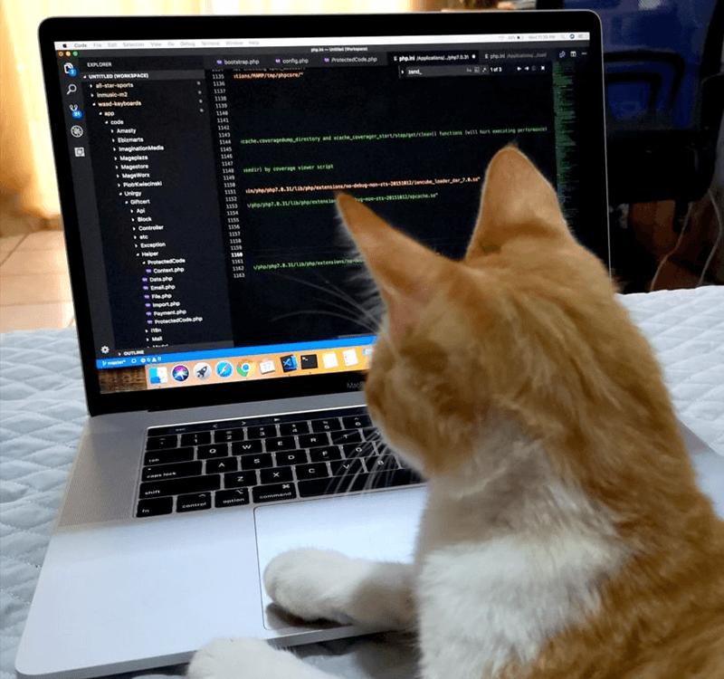 Magento Developer Yanci